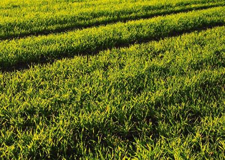 江苏省盱眙县2017年土地流转价格已达到每亩多少元?