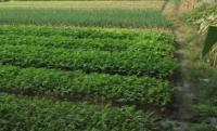 2017年中央一号文件惠农新政策