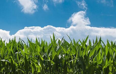 大理宾川县召开16万亩高标准农田建设示范项目工程启动会