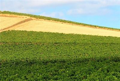 洛江区农业面源污染防治绩效管理实施方案