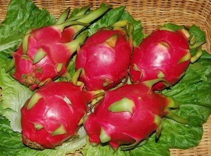 红心火龙果多少钱一斤?2017年市场种植前景怎么样?