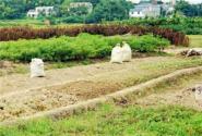 农村土地改革!现阶段土地流转更放心
