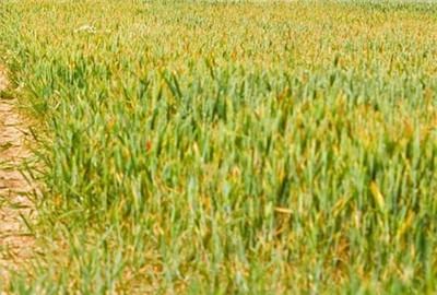 走进美国农业:不一样的美国农民地位