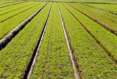 注意啦!四川省将严格控制建设占用耕地