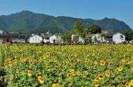 农资行业如何成为农业新动能的力量源泉?