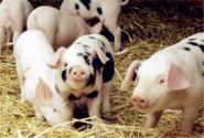 注意啦!贵州、湖北等地9批畜禽产品兽药残留超标