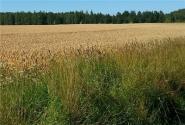 农业供给侧结构性改革的三大调整方向