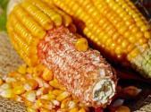 2017年玉米有补贴吗?玉米结构性改革补贴政策变化