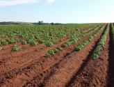 权威解读:2017年农业三项补贴怎么发?发给谁?