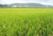 10天流转近万亩田地是如何完成的?