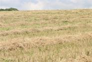 发改委:2017年着力推动农村产业融合