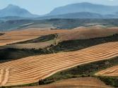 2017四川省委一号文件:关于以绿色发展理念引领农业供给侧结构性改革切实增强农业农村发展新动力的意见
