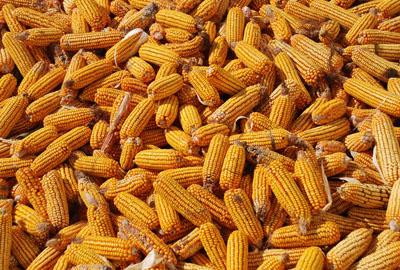 2017年推进农业结构调整,减玉米种值提升生猪生产