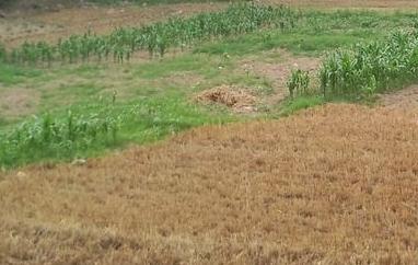 2017年宁夏省农村宅基地和集体建设用地使用权确权登记最新进展情况