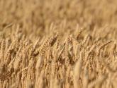 粮食直补是归土地承包者还是实际种植者?