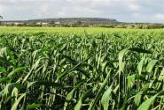 """推进""""三权分置""""培育农业发展新动能"""