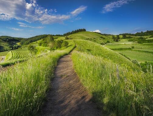 最新呼伦贝尔市草原生态保护补助奖励政策实施方案(2016-2020年)