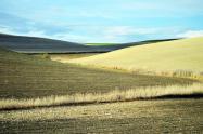 """土地确权是三农问题的""""牛鼻子"""""""