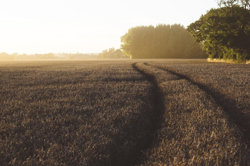 种田大户纷纷违约退地,土地流转种植户怎么才能赚钱?