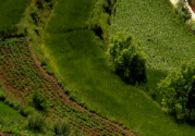 不同类型的家庭农场参考标准是怎样的?如何申报呢?