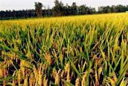 2017年最值得期待的十大农业补贴政策