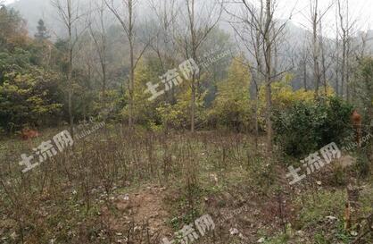 河南省信阳市淮滨国有农场实施无土培育技术成效显著