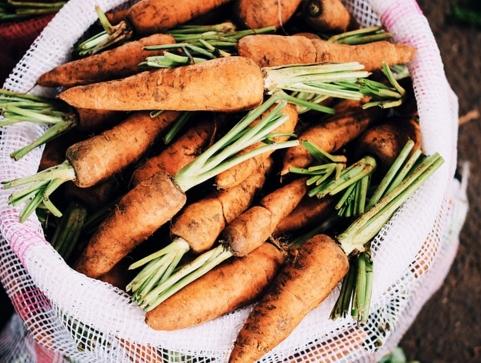 春季适合种什么蔬菜?什么时候种?什么时候收获?