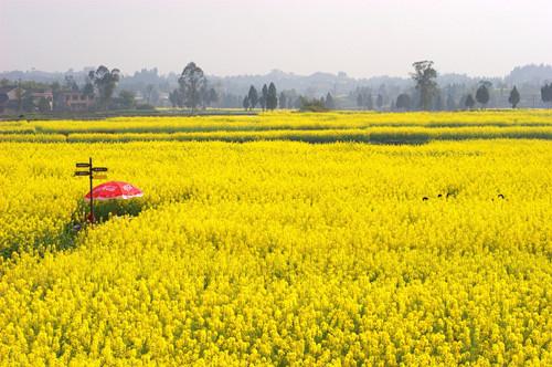 土地先整合再流转 农民每年增收7万元