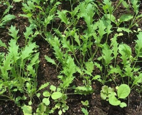 什么方位的阳台适合种菜?阳台种植什么蔬菜好?