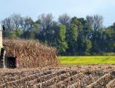 东北玉米又增补贴,这回你能拿到吗?(附各项农业补贴发放形式及流程)