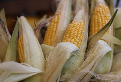 2017年玉米收购政策出新规:四大市场调整,玉米不再赔钱