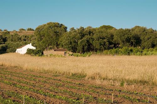 农村土地承包经营权流转的法律规定和相关案例