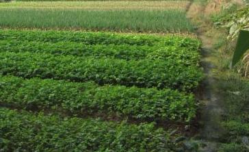 土地流转让农民获得双收益(致富案例)