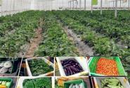 农民专业合作社贷款好贷吗?条件有哪些?
