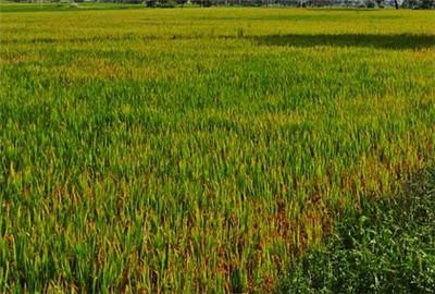 葫芦岛市土壤污染防治工作方案