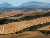 关于进一步深入推进农村土地实行三权分置的建议
