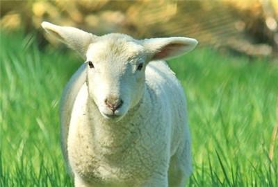 眉山市彭山区畜牧局2017年工作要点