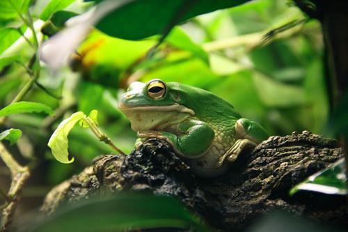 小朋友放学会拿着自制的钓杆和布袋,前往稻田边去钓青蛙.在稻田里