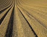 土地流转知识解答:土地流转价是多少?流转合同签多少年合适?转包还是出租好?