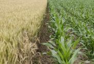 2017年粮食补贴惠农政策有哪些?补贴标准是多少钱一亩?