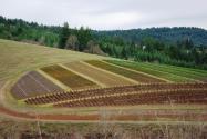 土地流转新模式致富案例:农民在家门口年入上万