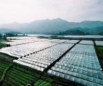 土地流转致富案例:土地建果园蔬菜大棚农民年入10万