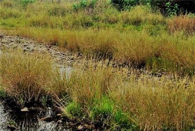 梅河口市土壤污染防治工作方案