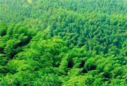 2017国家对林业扶持政策有哪些?(附林业扶持政策一览表)