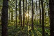 《辽宁省森林资源流转办法》2017年5月施行 流转期限是多久?