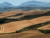 禽蛋价格跌到8年低点、肉价还有点高,农业部预测:今年农产品谁会涨、谁会跌?