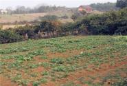 农村的宅基地和自留地属于谁所有?可以继承吗?