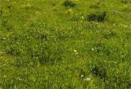 玉树州土壤污染防治工作方案
