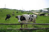 开办家庭农场的6个赚钱好办法,学会了就回农村创业!