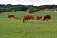 这几年在农村干什么能挣钱?这四个致富新途径你知道吗?